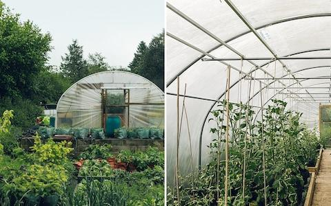 the polytunnel at The Black Swan - Credit: India Hobson