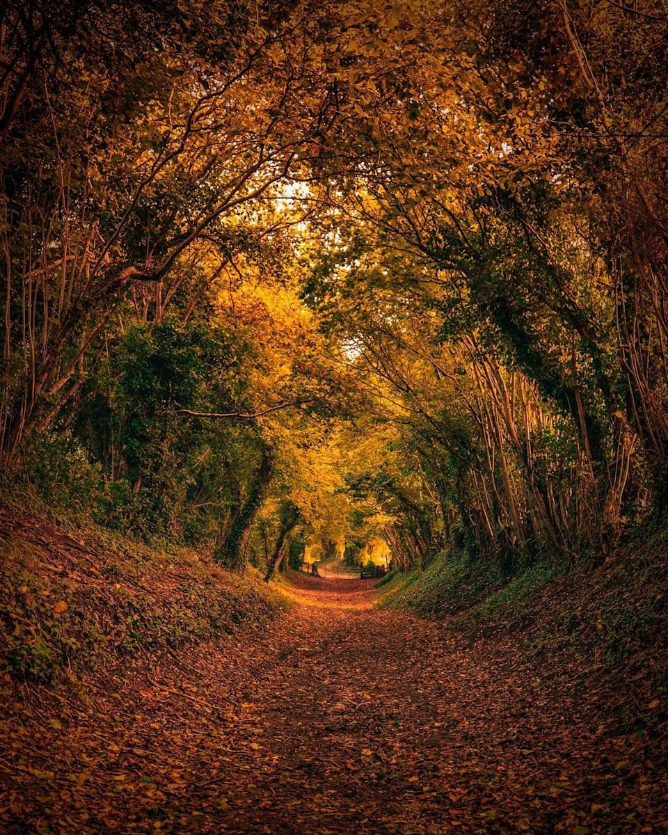 """<p>Situated in West Sussex, the fairy tale-like Halnaker tree tunnel is an incredible sight to behold. You'll find it on the way to the Halnaker Windmill near Chichester. </p><p><a class=""""link rapid-noclick-resp"""" href=""""https://www.westsussex.gov.uk/leisure-recreation-and-community/places-to-visit-and-explore/halnaker-windmill/"""" rel=""""nofollow noopener"""" target=""""_blank"""" data-ylk=""""slk:MORE INFO"""">MORE INFO</a></p>"""