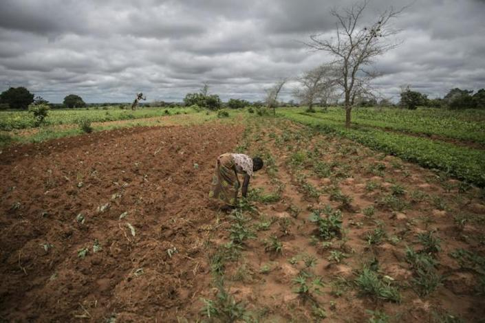 Small farmer and single mother Imelda Hicoombolwa sows cowpeas and other crops that are less thirsty than corn -- they have a better chance of surviving in the relentless drought (AFP Photo/Guillem Sartorio)