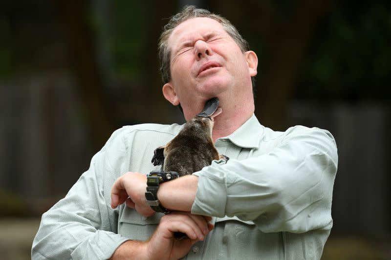 Taronga Zoo senior keeper Rob Dockerill holds Annie the Platypus during a World Wildlife Day announcement pledging to save the Australian platypus from extinction, at Taronga Zoo in Sydney