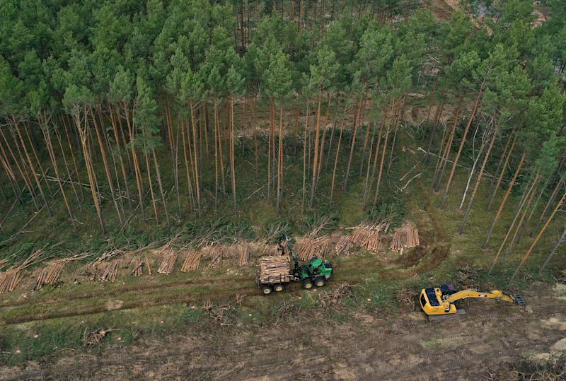 GRUENHEIDE, GERMANY - FEBRUARY 17: (EDITORS NOTE: Image taken with a drone.) In this aerial view a forestry machine collects logs on land cleared of trees at the site of the new Tesla Gigafactory on February 17, 2020 near Gruenheide, Germany. Environmentalists have succeeded in getting a court injunction to at least temporarily stop deforestation of the site. Tesla plans on building its first European Gigafactory at the site, located near Berlin, to eventually produce up to 500,000 electric cars per year. Environmentalists decry the loss of trees at the site and other local groups are challenging Tesla over possible strains on the region's water supply. (Photo by Sean Gallup/Getty Images)