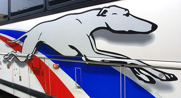Greyhound's company logo (Tim Boyle/Getty)