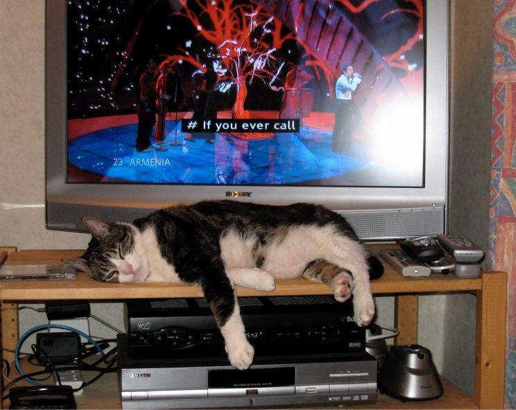 A cat on a TV