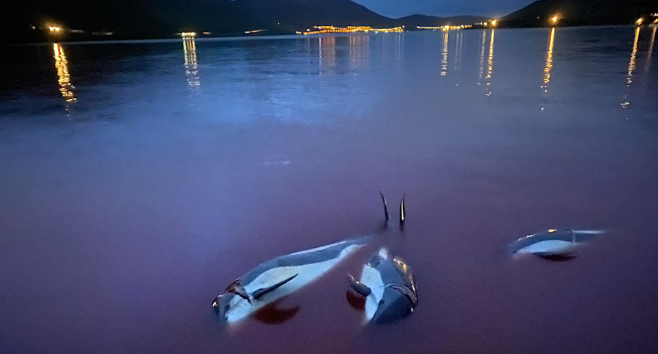 Some Faroe Islands locals have publicly criticised Monday's dolphin slaughter.