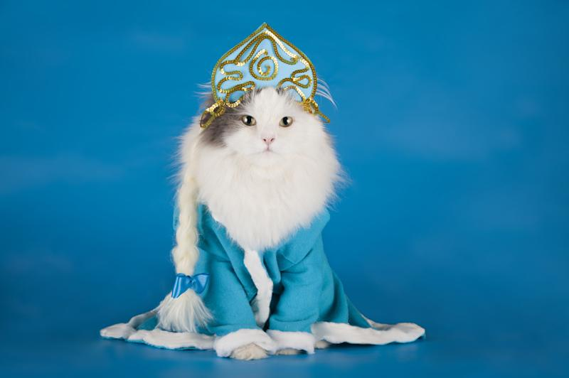 Cats are now into cosplay because the world needs some extra amazingness