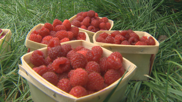 Kim Oliver says berries in particular are prone to expiring.