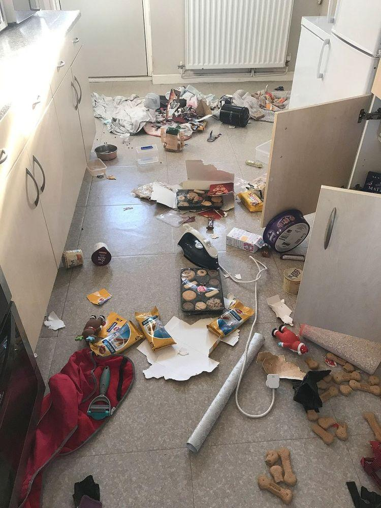 Kitchen wrecked by Dory | Caters