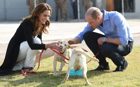 William and Kate meet puppies in training to find IEDs - Credit: Rex
