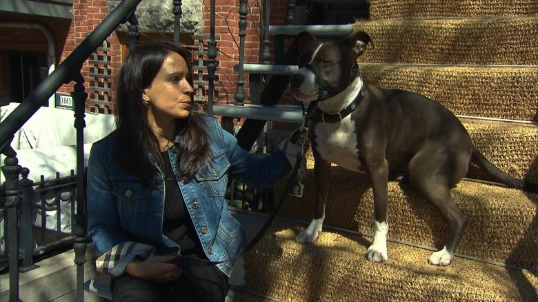 Dog owners, animal welfare groups blast Quebec's move to eventually ban pit bulls