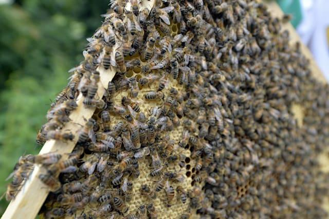 FRANCE-BEES