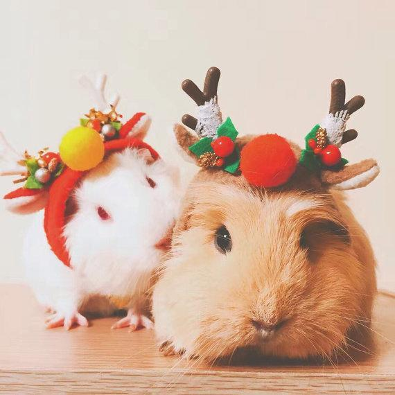 """<p>What makes a cute guinea pig even cuter? Tiny little festive antlers of course! These adorable costumes are fitted with an adjustable length of elastic and are perfect for other small pets too.</p><p>£16.50 <a href=""""https://www.etsy.com/uk/listing/254389299/christmas-special-guinea-pig-costume?ga_order=most_relevant&ga_search_type=all&ga_view_type=gallery&ga_search_query=pet&ref=sr_gallery_8"""" rel=""""nofollow noopener"""" target=""""_blank"""" data-ylk=""""slk:Crafted 4 Pets"""" class=""""link rapid-noclick-resp"""">Crafted 4 Pets</a></p>"""