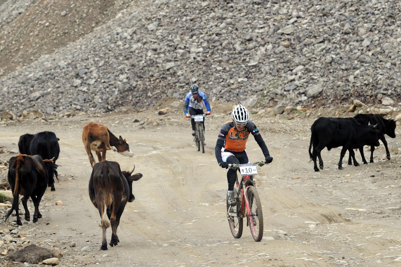 Holland's Irjan Luttenberg (front) and Nathan Dahlberg of Team World United ride past cows during the first stage of the Himalayas 2011 International Mountainbike Race in the mountainous area of Gitti Das in Pakistan's tourist region of Naran in Khyber Pakhtunkhwa province on September 16, 2011. The cycling event, organised by the Kaghan Memorial Trust to raise funds for its charity school set up in the Kaghan valley for children affected in the October 2005 earthquake, attracted some 30 International and 11 Pakistani cyclists. AFP PHOTO / AAMIR QURESHI (Photo credit should read AAMIR QURESHI/AFP/Getty Images)