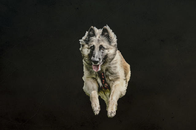"<p>Mueller said: ""When I saw the photos on my screen, the idea came to me: flying dogs. (Photo: Peter Mueller/Caters News) </p>"