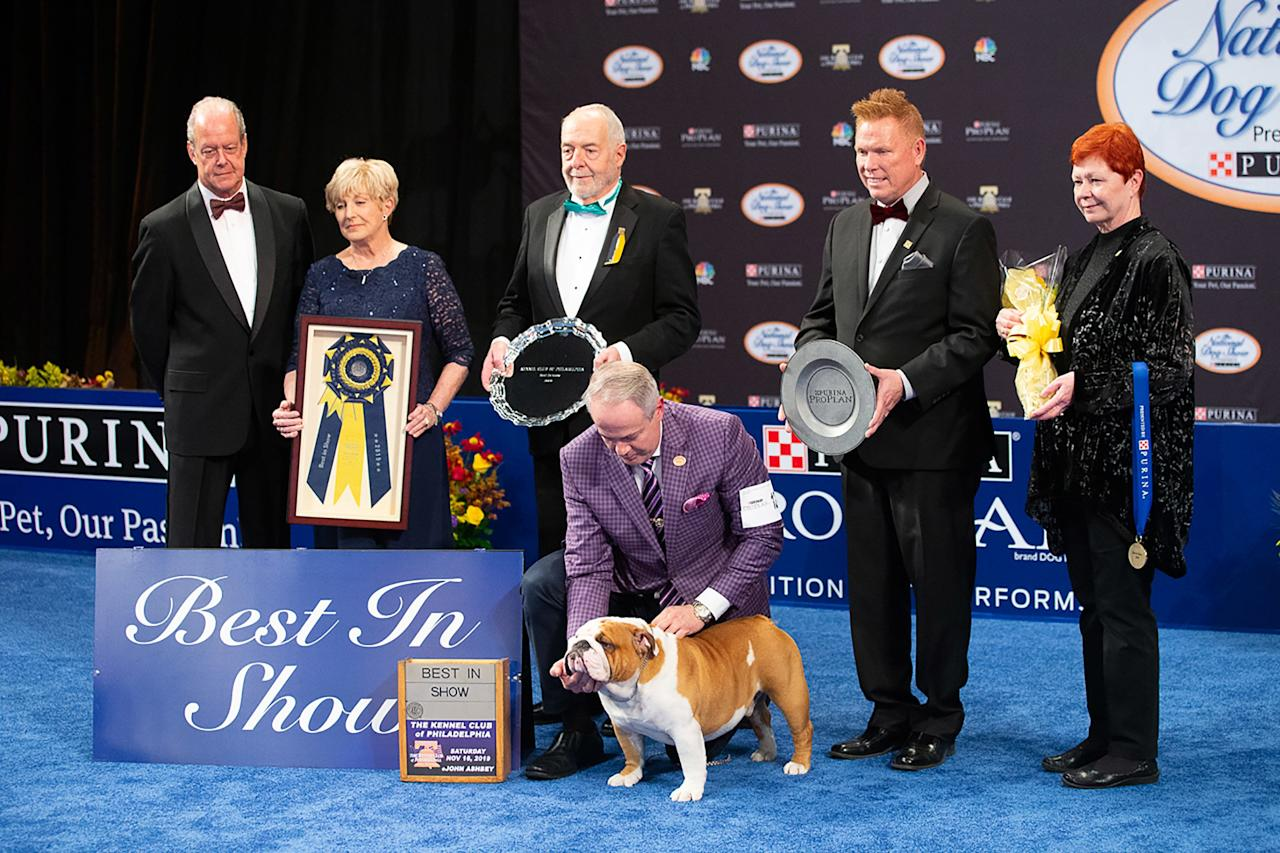 """The bulldog, whose registered show name is GCHG Diamond Gold Majesu Pisko Bulls, beat out thousands of other dogs to earn the top prize with help from his handler, Eduardo Paris of Houston, Texas.  """"Thor won today because of his structure and because he moves so well. He has been showing since September 2018 and has won 27 specialties since he has been showing,"""" Paris proudly shared.  Before getting his ribbon, Thor won the Non-Sporting Group to make it to the final Best in Show round. Joining him in this prestigious pack was Nick the Siberian Husky, Daniel the Golden Retriever, Blaine the Soft-Coated Wheaten Terrier, Sophia the Old English Sheepdog, Bono the Havanese, and Maddie the Pharaoh Hound."""