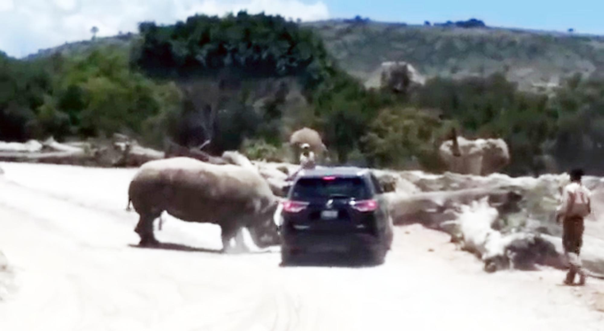 The shocking moment a safari park rhino attacks a family's car