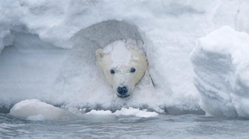 Lisa Murkowski Introduces Bill To Open Arctic Wildlife Refuge To Oil Drilling