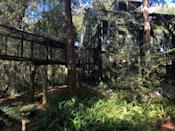 The Center For Great Apes is located on 40 hectares (98 acres) of wooded land near Wauchula, surrounded by central Florida's orange groves