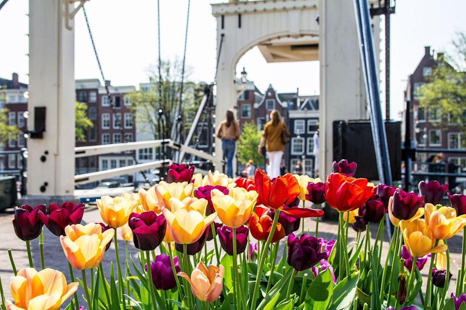 """<p>Spring is arguably the best time to visit Amsterdam, when the tulips are in full bloom and you can discover the symbol of Holland on a delightful <a href=""""https://www.primaholidays.co.uk/tours/netherlands-holland-tulips-cruise-adam-frost"""" rel=""""nofollow noopener"""" target=""""_blank"""" data-ylk=""""slk:Amsterdam mini-cruise"""" class=""""link rapid-noclick-resp"""">Amsterdam mini-cruise</a>.</p><p>It's the season to visit world-famous garden Keukenhof, in nearby Lisse, where a sea of colourful tulips take over the garden for just a few weeks each year.</p><p>While things are looking different this year and we're unable to travel due to Covid restrictions, now is the perfect time to be inspired for a spring 2022 escape when we can head to Amsterdam and soak up the seasonal vibes.</p><p>During an Amsterdam mini-cruise in spring, you can visit the city's flower market, housed on a series of boats and offering a floating floral paradise in the city. You can also pick up tulip bulbs, which you can plant in the autumn ready for a beautiful display in spring.</p><p>An Amsterdam mini-cruise offers an excellent opportunity to take in the colourful tulips and see Holland in all its glory, as you go beyond Amsterdam to other parts of the country by boat. Hoorn and Harlingen are two often-overlooked places in the Netherlands that you can visit on an Amsterdam mini-cruise. </p><p>Be inspired to visit in spring 2022 with these gorgeous photos of Amsterdam's tulips in spring...</p><p><strong><a href=""""https://www.primaholidays.co.uk/tours/netherlands-holland-tulips-cruise-adam-frost"""" rel=""""nofollow noopener"""" target=""""_blank"""" data-ylk=""""slk:Want to see the tulips with Prima next spring? Check out our exclusive Amsterdam mini-cruise, including tickets to Keukenhof and a unique visit to the attraction with Gardeners' World star Adam Frost."""" class=""""link rapid-noclick-resp"""">Want to see the tulips with Prima next spring? Check out our exclusive Amsterdam mini-cruise, including tickets to Keukenhof and a uni"""