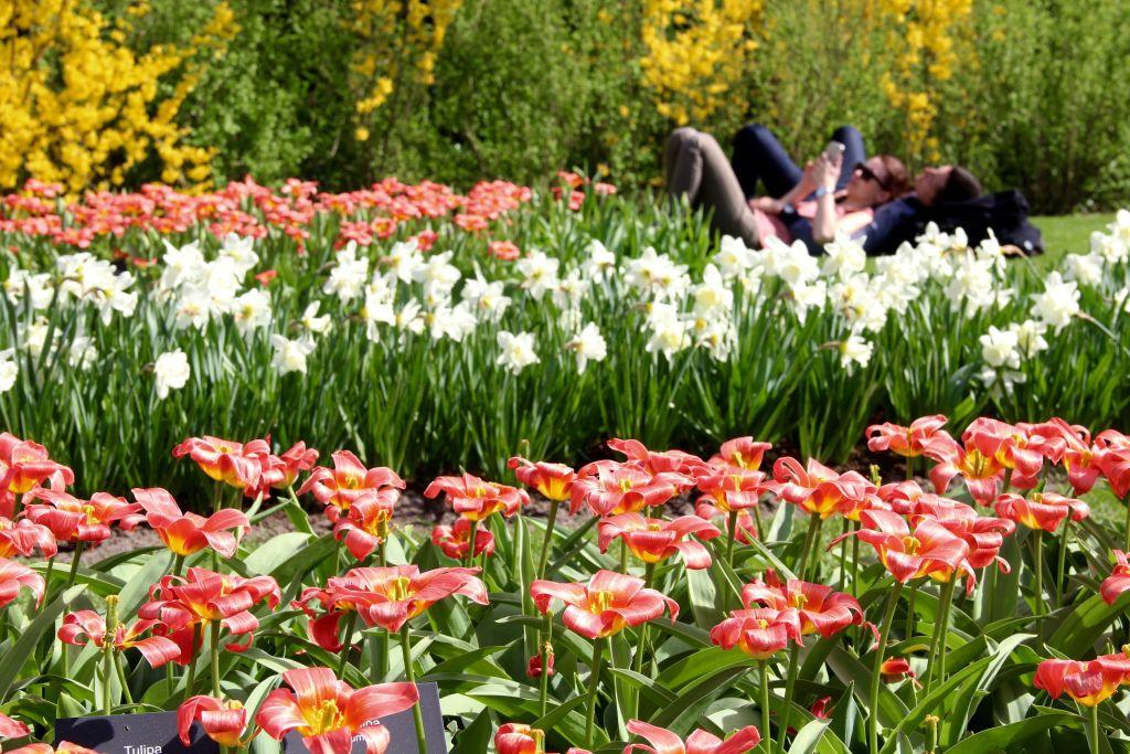 <p>People visit the Keukenhof, one of the world's largest flower and tulip garden in Lisse, Netherlands. This year's theme of the floral park is romance. (Abdullah Asiran/Anadolu Agency/Getty Images) </p>