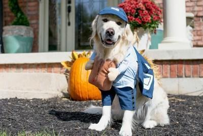 Petsmart For Halloween Costume 2020 Pumpkins, Hot Dogs and Superheroes Top 2020 List of Most Popular