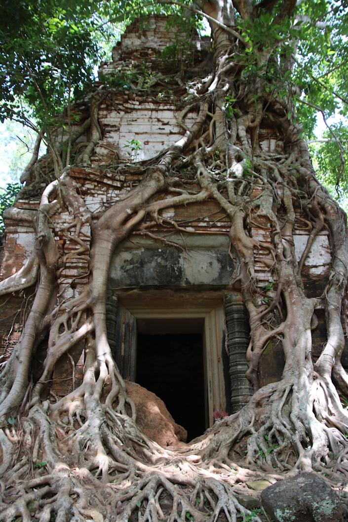 A root-covered doorway at the Ta Prohm temple.