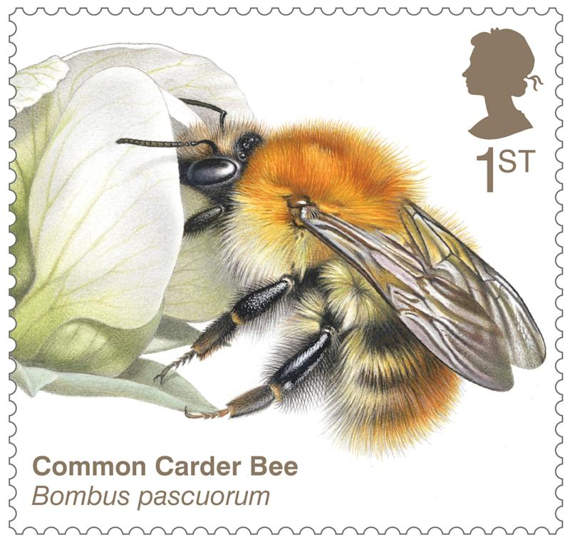 Common carder bee stamp