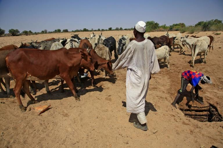 Inter-communal violence in Darfur has often been associated with livestock and access to precious water resources