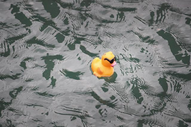 <p>A rubber duck floats down the Chicago River during the Windy City Rubber Ducky Derby on August 3, 2017 in Chicago, Illinois. (Photo: Scott Olson/Getty Images) </p>