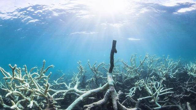 Coral Bleaching Along Great Barrier Reef Elevated To Highest Response Level