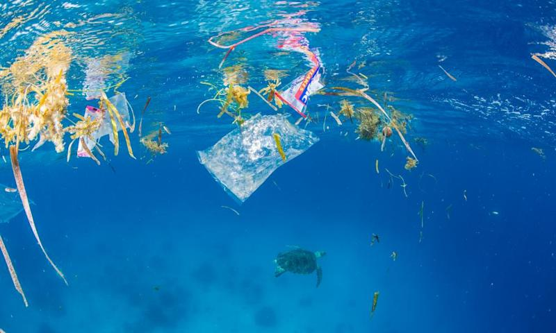 A green sea turtle swims amid plastic in the Philippines