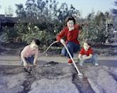 <p>Shirley gets a helping hand in the garden from her two youngest children, Lori and Charles, Jr., in 1957. </p>