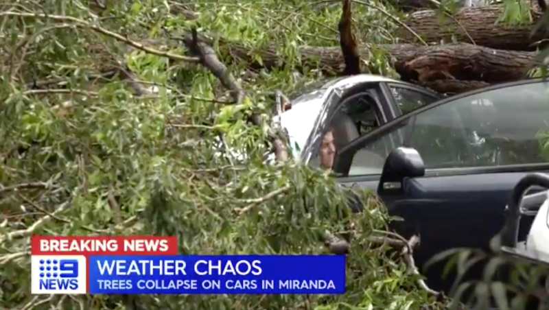 A person sits in a car crushed by a tree in Miranda, NSW.