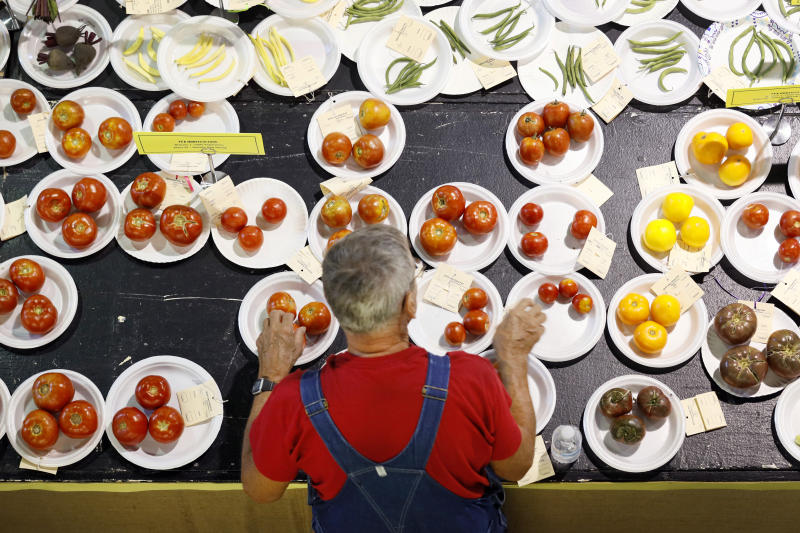 Skip Hitchcock judges FFA produce during the opening day of the Iowa State Fair, Thursday, Aug. 8, 2019, in Des Moines, Iowa. (AP Photo/Charlie Neibergall)
