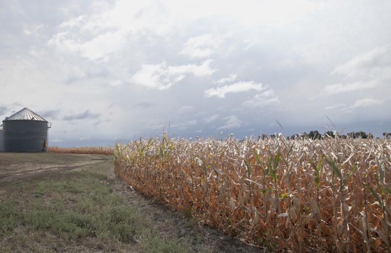 A field of dry corn is seen by a storage silo near Bennington, Neb., Thursday, Aug. 16, 2012. Dry conditions have worsened in the key farming states of Kansas and Nebraska as the worst U.S. drought in decades continues, the latest national report said Thursday. (AP Photo/Nati Harnik)