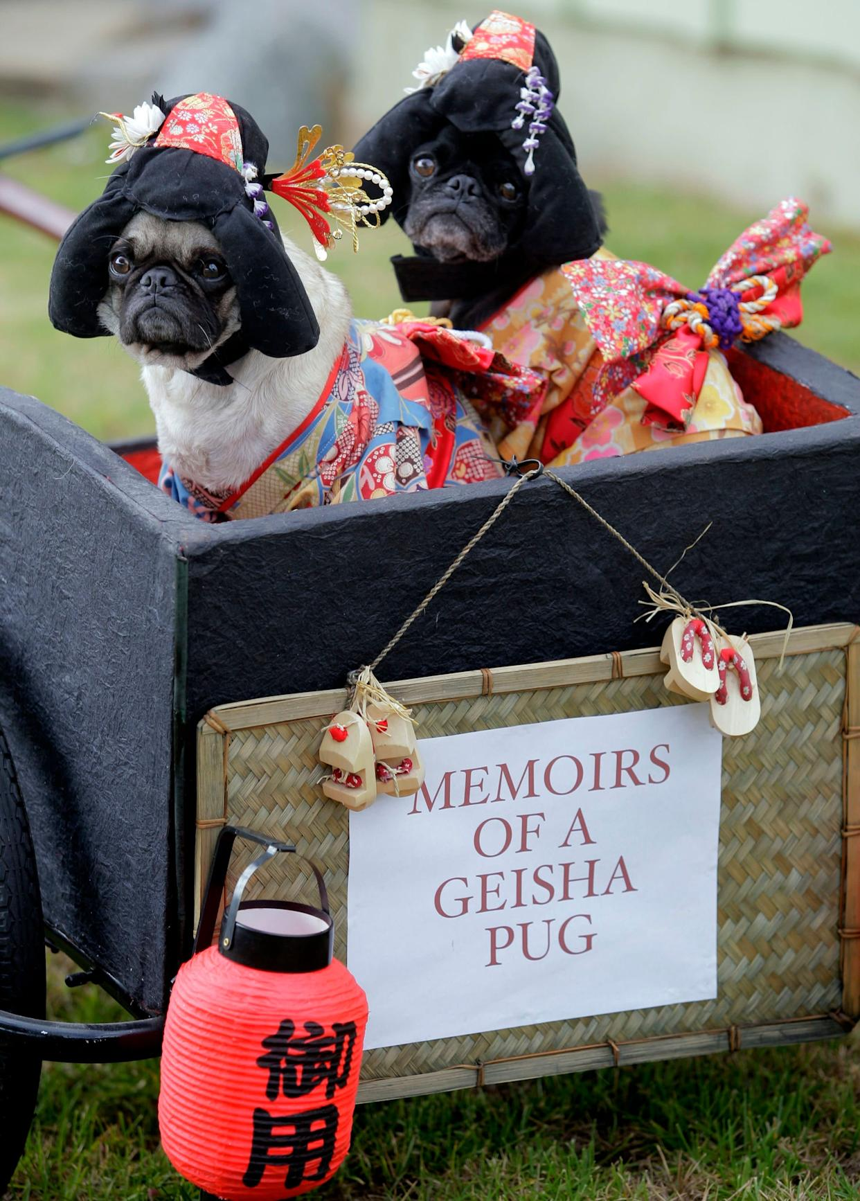 """This photo taken Oct. 4, 2009 shows pugs Mochi, left, and Olive posing for a photo dressed as Geisha girls at they're home in Huntington Beach Calif. The stepsisters have been geisha girls, surfer girls and sushi over the years. They may not understand the tradition, but """"pugs understand positive energy,"""" explained dog owner, partner and costume designer Lisa Woodruff. (AP Photo/Richard Vogel)"""