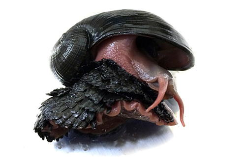 """<span class=""""caption"""">The scaly-foot snail, otherwise known as the sea pangolin. </span>"""