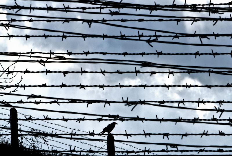 In a Dec. 10, 2010 file picture, a bird is seen behind barbed wire fences in Fort 13 of the Jilava jail in Jilava, Romania. After decades of denial, chilling details are emerging about the torment guards inflicted upon political prisoners in Romanian communist-era gulags, as part of a first small step toward holding them to account. The names of 35 guards _ now in their 80s or 90s _ are to be handed to authorities this month for possible prosecution by a government institution tasked with investigating communist-era crimes, The Associated Press has learned.(AP Photo/Vadim Ghirda, File)