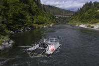 FILE - In this June 8, 2021, file photo, a fish trap used to catch and document the health of salmon floats in the lower Klamath River in Weitchpec, Calif. Baby salmon are dying by the thousands in one California river, and an entire run of endangered salmon could be wiped out in another. Fishermen who make their living off adult salmon, once they enter the Pacific Ocean, are sounding the alarm as blistering heat waves and extended drought in the U.S. West raise water temperatures and imperil fish from Idaho to California. (AP Photo/Nathan Howard, File)