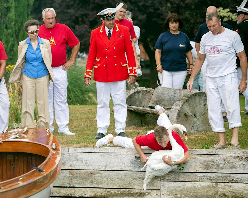 The Princess Royal consults the annual census of the population of swans on the Thames, called Swan Upping