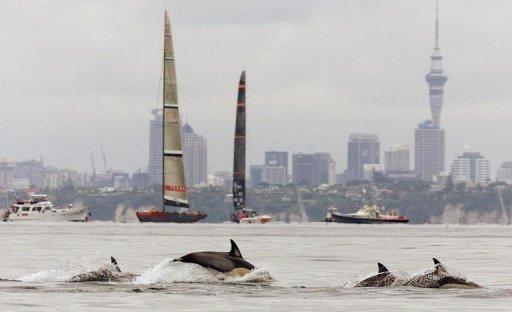 File photo shows dolphins off the coast of Auckland, New Zealand. The International Whaling Commission voiced fears for Maui's dolphins -- some of the world's smallest dolphins found only on New Zealand's North Island -- and the vaquita, a 1.5-meter (five-foot) porpoise in the Gulf of California
