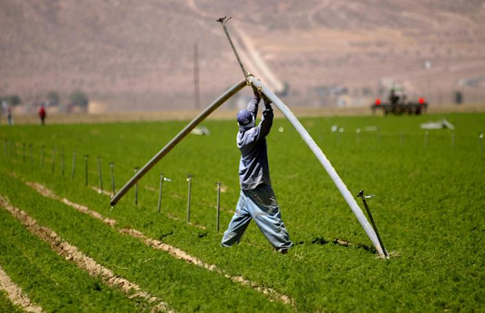 A Grimmway Farms employee moves a water pipe at one of their carrot farms in the Antelope Valley near Lancaster, Calif., in 2004. (Stephen Osman / Los Angeles Times via AP file)