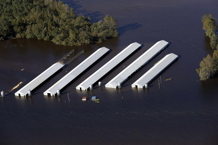 <p>A Concentrated Animal Feeding Operation, or factory farm, flooded by Hurricane Matthew, which hit North Carolina and other Atlantic coastal states in 2016. (Photo: Rick Dove/Riverkeeper Alliance) </p>