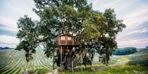 """<p>Stay 26 feet above the ground at <a class=""""link rapid-noclick-resp"""" href=""""https://www.housebeautiful.com/lifestyle/a4976/italian-treehouse-suite-in-the-olive-grove/"""" rel=""""nofollow noopener"""" target=""""_blank"""" data-ylk=""""slk:La Piantata"""">La Piantata</a>, a high-end Italian bed and breakfast in the rolling countryside of Arlena di Castro. Guests lucky enough to book this room climb a winding staircase for a scenic view of the olive grove.</p><p><a class=""""link rapid-noclick-resp"""" href=""""https://go.redirectingat.com?id=74968X1596630&url=https%3A%2F%2Fwww.tripadvisor.com%2FHotel_Review-g6215602-d1836837-Reviews-Agriturismo_La_Piantata-Arlena_di_Castro_Province_of_Viterbo_Lazio.html&sref=https%3A%2F%2Fwww.housebeautiful.com%2Fdesign-inspiration%2Fhouse-tours%2Fg3301%2Famazing-tree-house-homes%2F"""" rel=""""nofollow noopener"""" target=""""_blank"""" data-ylk=""""slk:BOOK NOW"""">BOOK NOW</a> <strong><em>La Piantata</em></strong><br></p>"""