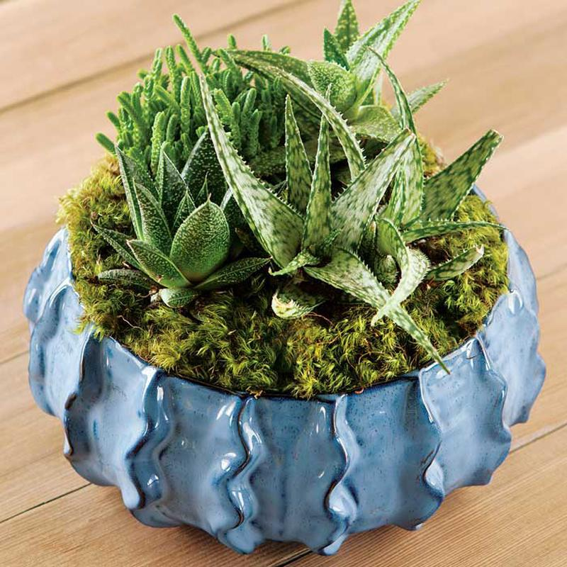 """<p>No time to remember to water any plants? No problem. Gift a succulent to the loved one on your list who's crunched on time but in need of a little greenery. </p><p>Buy it <a rel=""""nofollow noopener"""" href=""""https://www.oliveandcocoa.com/product/bleu-succulent-potager/succulents-and-plants?gclid=Cj0KEQiA08rBBRDUn4qproqwzYMBEiQAqpzns2bOIbfoiSeEQX0eZAfyPPxoy1qAR6OwOPdK_juA9tsaAibp8P8HAQ"""" target=""""_blank"""" data-ylk=""""slk:here"""" class=""""link rapid-noclick-resp"""">here</a> for $78.</p>"""