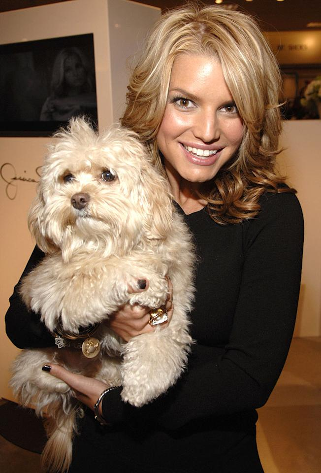 "Jessica Simpson and her dog Daisy. Kevin Mazur/<a href=""http://www.wireimage.com"" target=""new"">WireImage.com</a> - October 28, 2006"