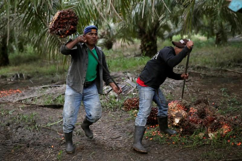 Palm oil falls 2% on lower-than-expected exports amid India-Malaysia tensions