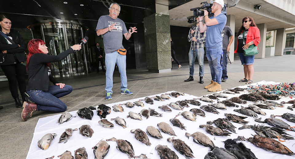 After 35 years of campaigning, Laurie Levy (centre) believes duck season will soon be ended in Victoria. Source: AAP