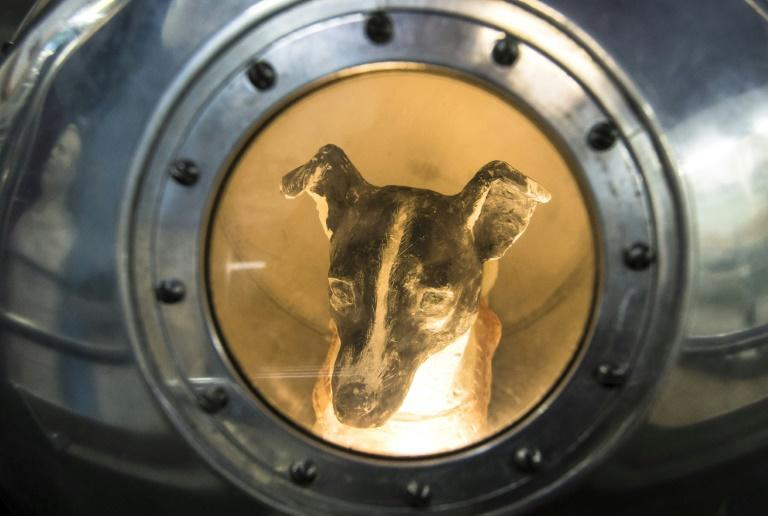 An effigy of Laika inside a replica of satellite Sputnik II is on display to visitors at the Central House of Aviation and Cosmonautics in Moscow