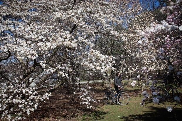 A cyclist wearing a mask walks his bike through the Dominion Arboretum in Ottawa on April 23, 2021, during the third wave of the COVID-19 pandemic. (Trevor Pritchard/CBC - image credit)