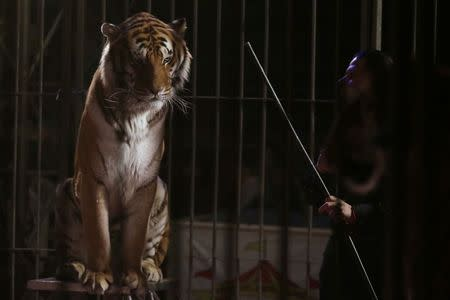 A trainer stands next to a tiger during a show at the Cedeno Hermanos Circus in Mexico City March 9, 2015. REUTERS/Henry Romero